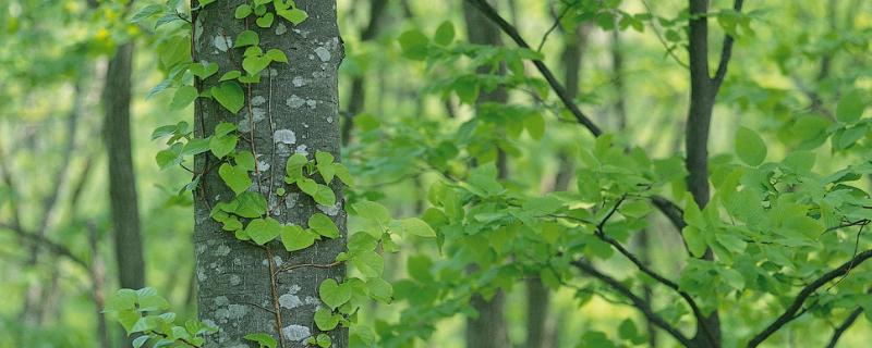 树木移栽后萎蔫的补救