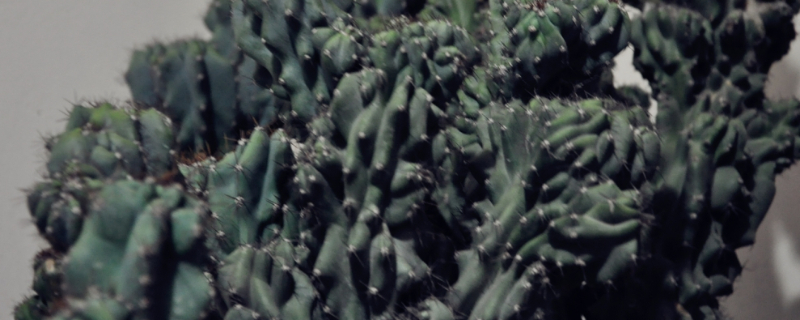 虎头山影的养殖方法和注意事项