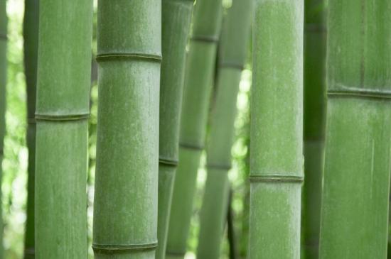 竹子用深盆还是浅盆栽