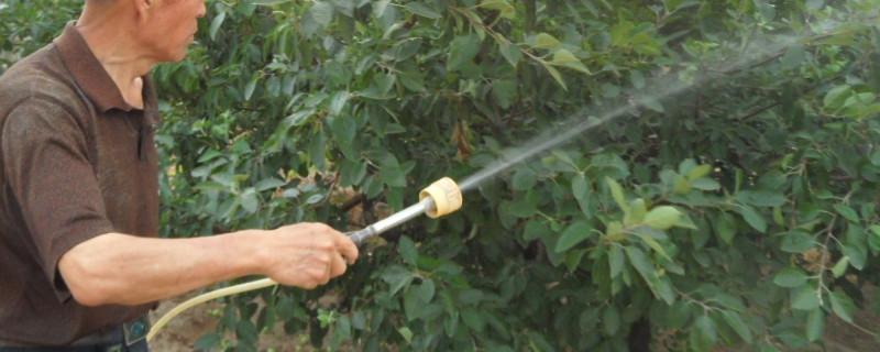 施肥时浇水是为了什么