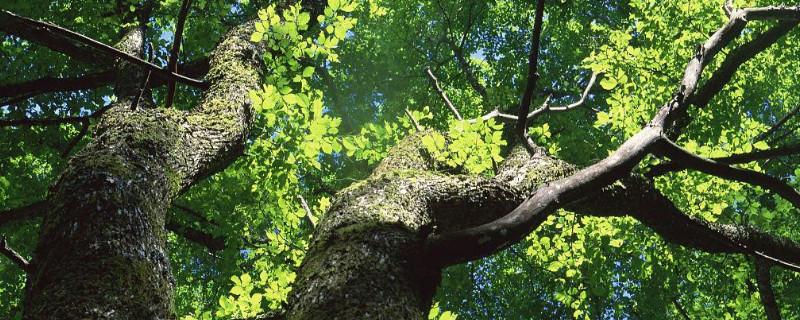 榆樹上的蟲子怎么殺死
