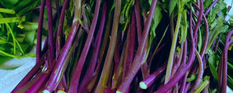 红油菜苔种植time和方法