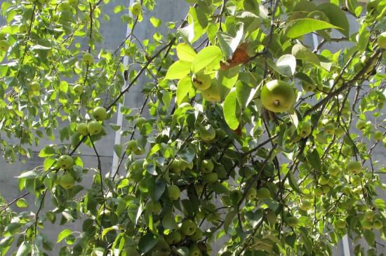 梨樹一年打藥順序及用什么藥