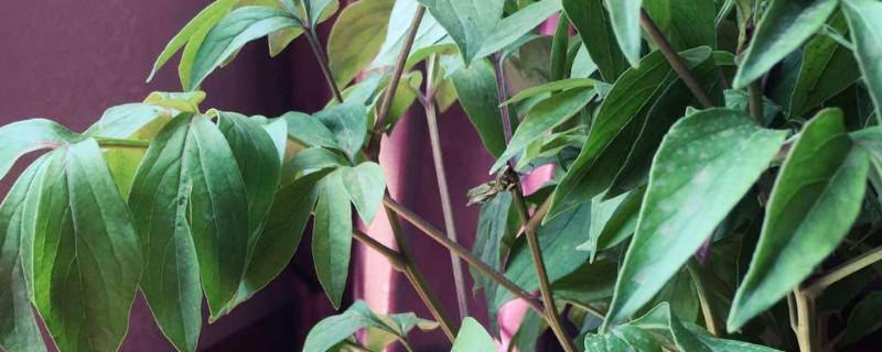植物被太阳晒蔫了怎么办