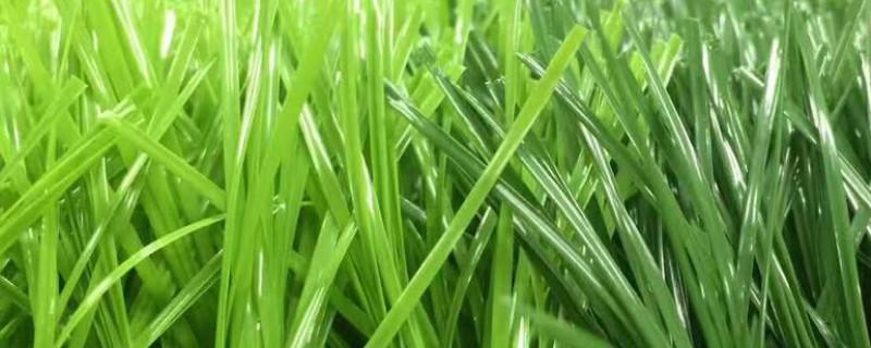 草坪草發黃怎么解決