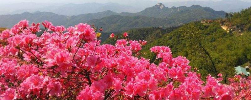 兴安杜鹃的种子繁殖与管理