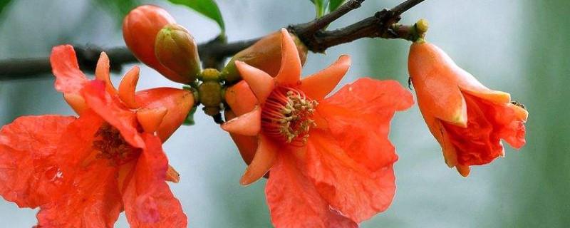 春夏之交开花的是什么树