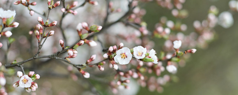 花蕾与花苞有什么不同
