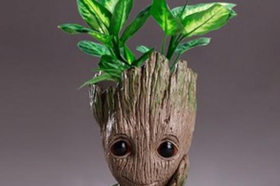 格鲁特小树人盆栽寓意