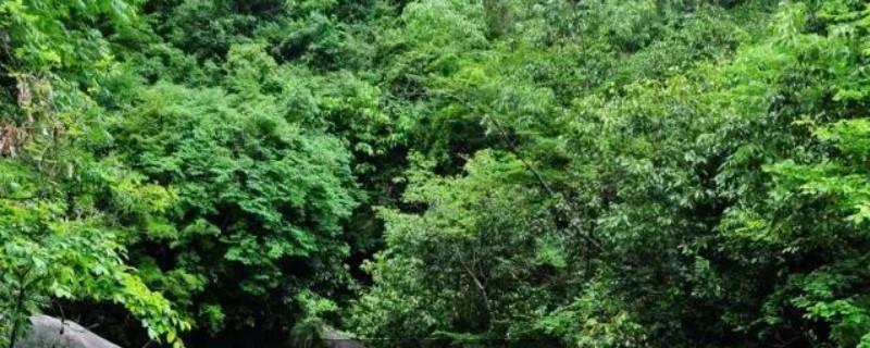 白蜡树的特点