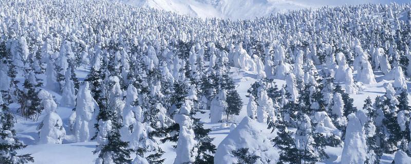 常绿乔木有哪些树种