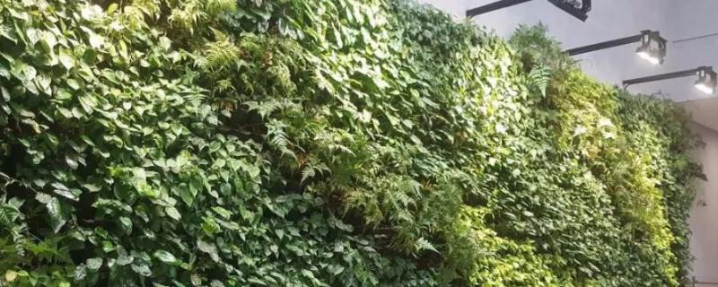 补光灯对植物有作用吗