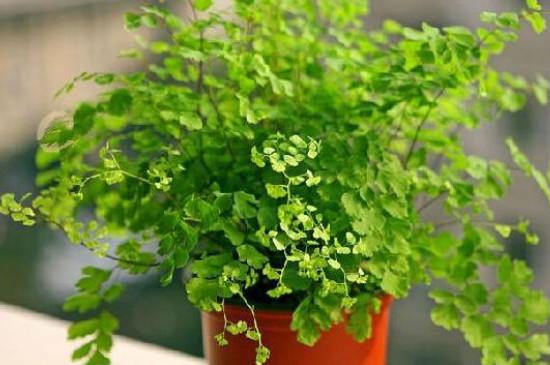 聚谷氨酸对植物的作用