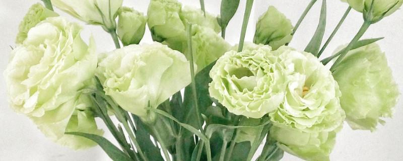 跟玫瑰很像但没刺的花是什么