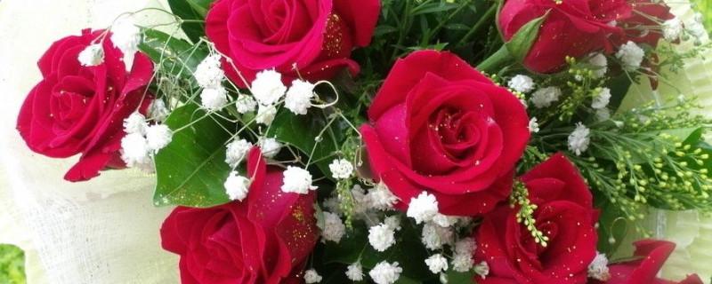 玫瑰花什么時候修剪,怎樣修剪