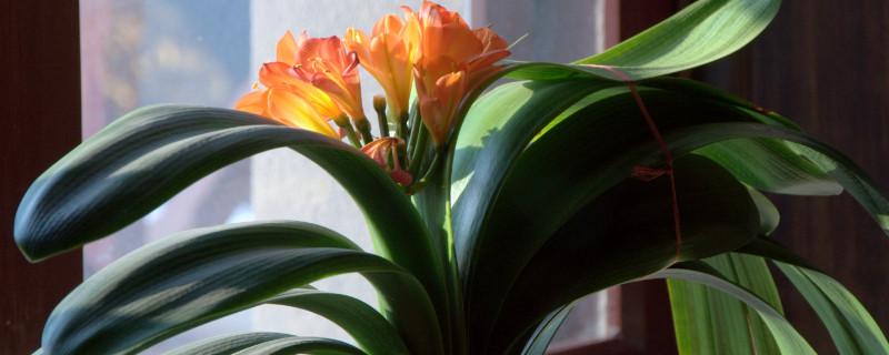 对通风要求不高的植物