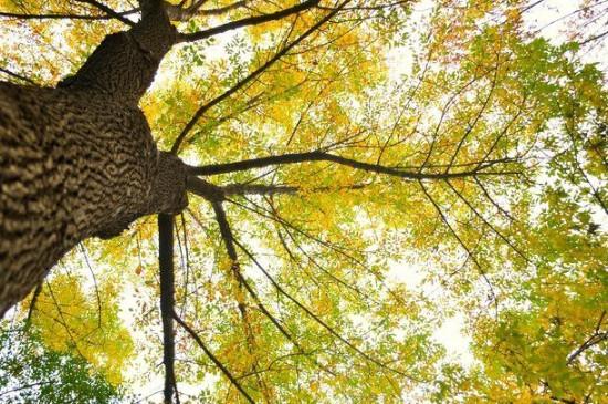 秋天叶子为什么会变黄落下