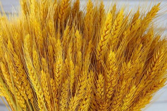 大麦花束寓意