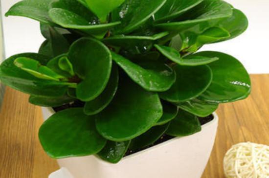 豆瓣绿的功效与作用