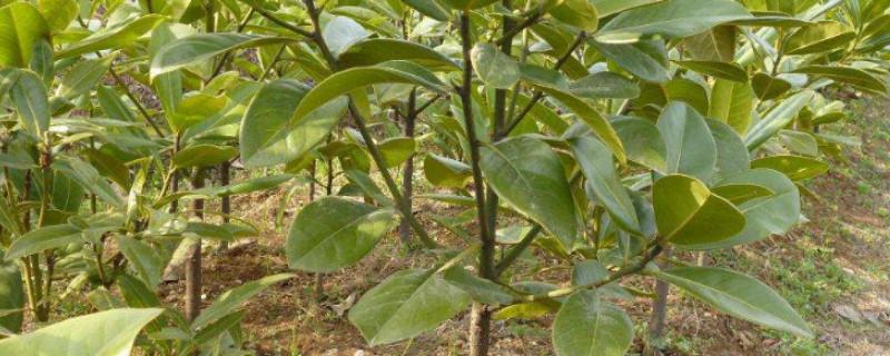 11月份种树成活率高吗