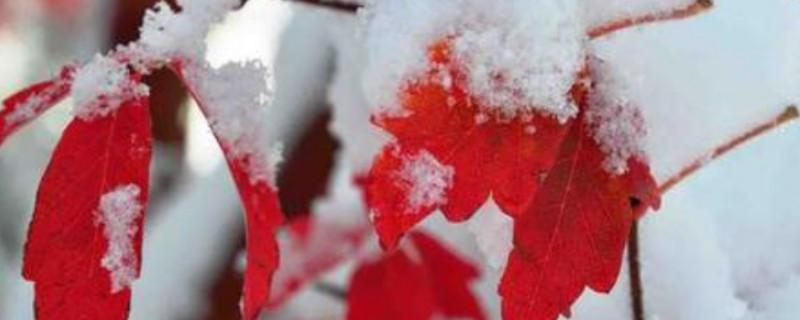立冬种树能种活吗