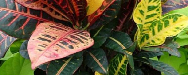 室内花叶子发黄是什么原因