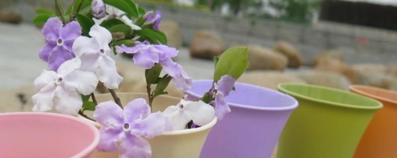 塑料盆栽花有毒吗