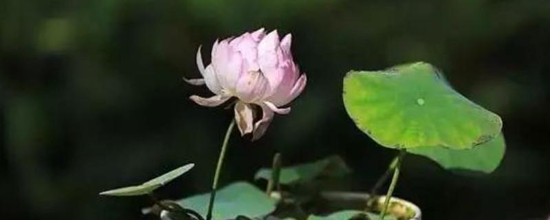 紫外线照射过的植物还能活么