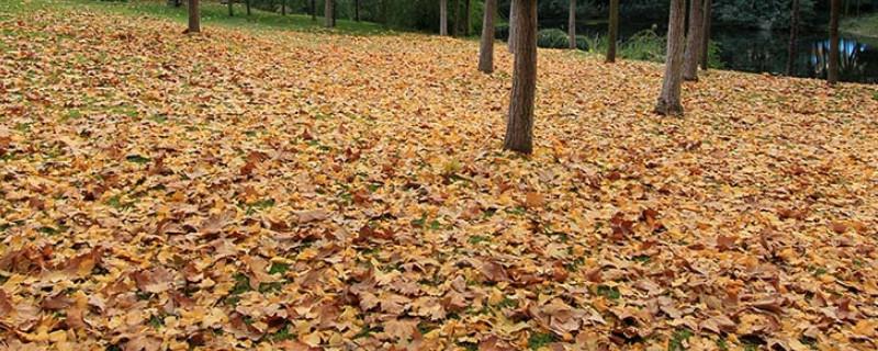 落叶处理的最佳方法是