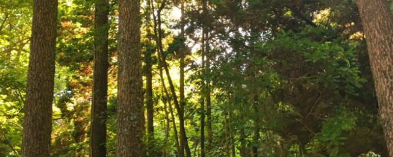 鐵木是什么木