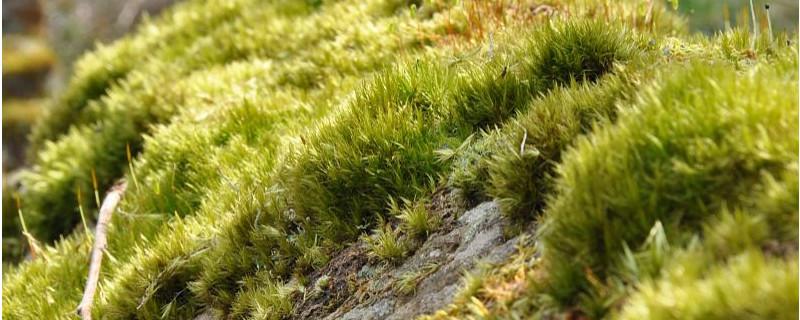苔藓植物和蕨类植物的相同点和不同点