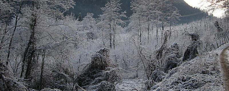 冬天发财树浇水要不要浇透