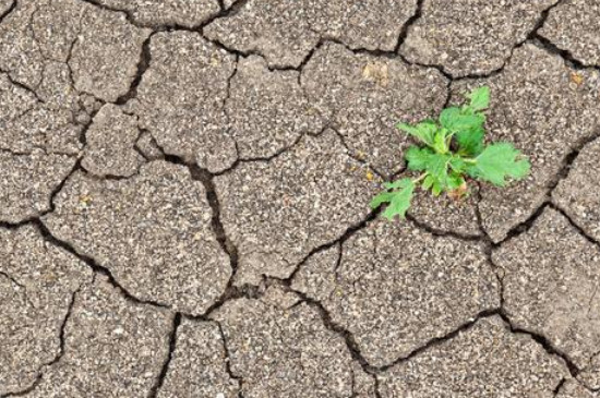 土壤板结的原因