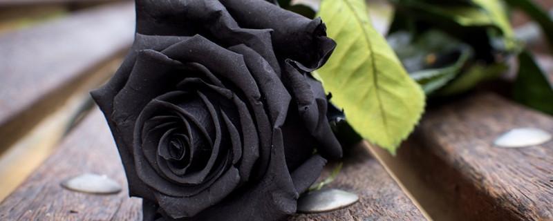 黑色玫瑰花花語是什么