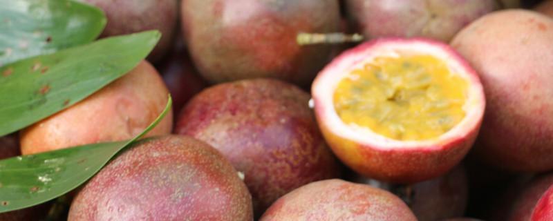 百香果品种