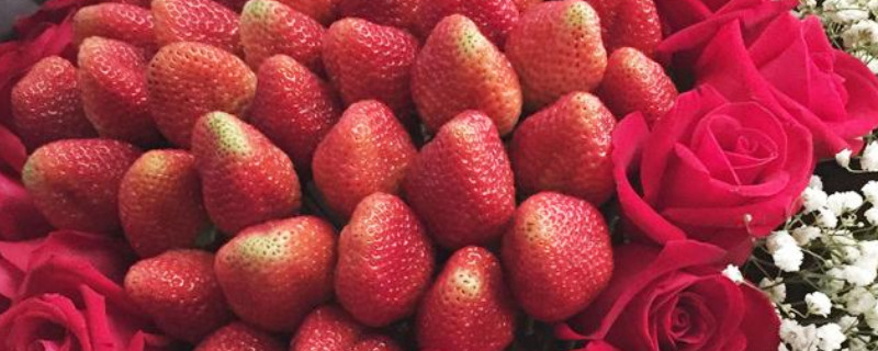 19个草莓花束的寓意