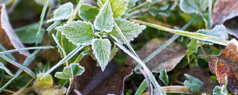 花叶子被冻坏了怎么办