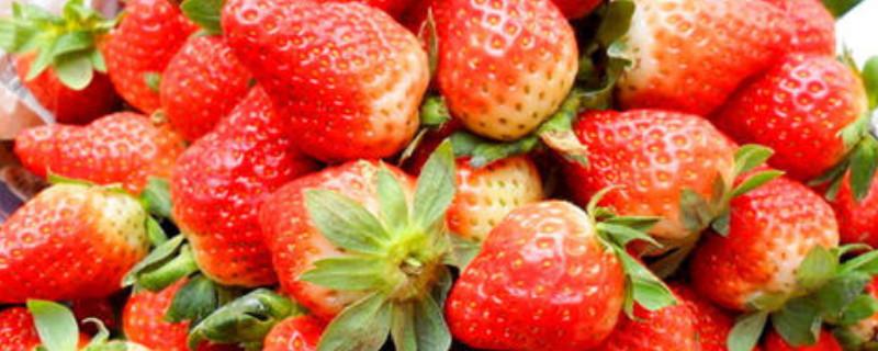 甜度最高的草莓品种