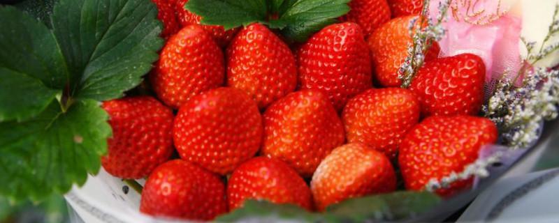 33颗草莓花束的寓意