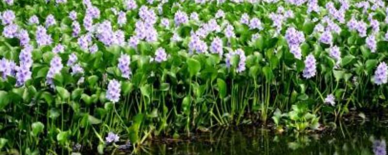 插水里就能活的植物花
