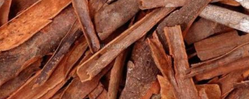 桂皮是什么树的皮,剥皮后树还能活吗?