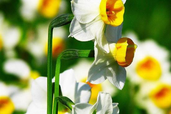 冬天开的花有哪几种花