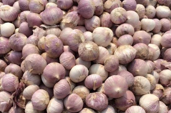 独头蒜用什么种子种的