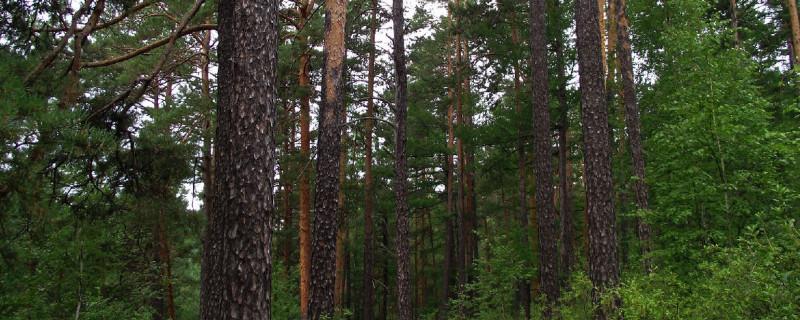 哪些树一年四季都是绿色的