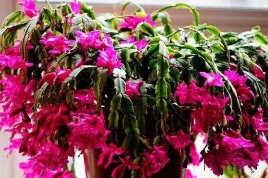 冻伤的花能缓过来吗