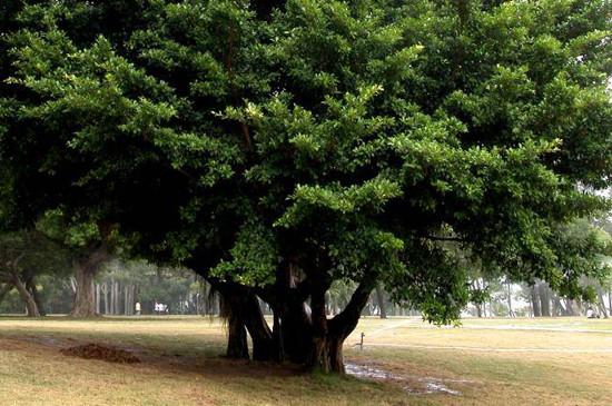 木本植物有什么特点