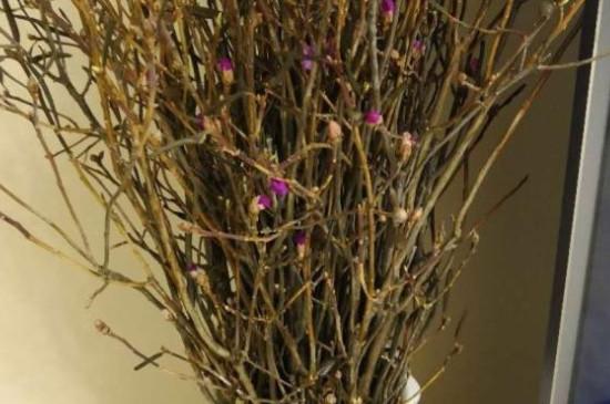 干枝遇水开花是什么原理