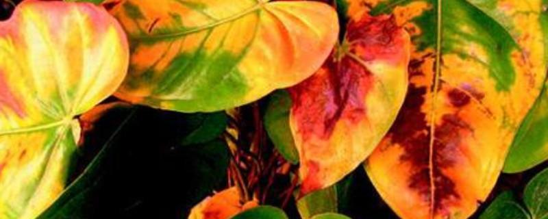 花黄叶子应该怎么补救