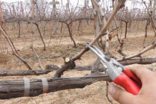 冬季修剪的主要方法和作用