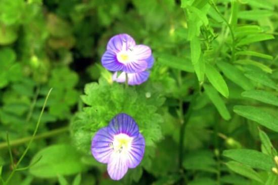 植物生长需要什么